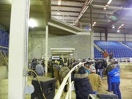 Cattle Producers Freeze Branding Demo Arrowquip Q Catch Northwest Tennessee Cattlemen