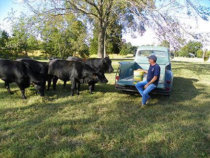 Harrell Stafford group of heifers Circle S Farms